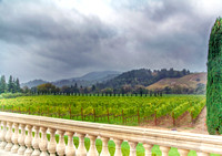 Sonoma Vineyard View