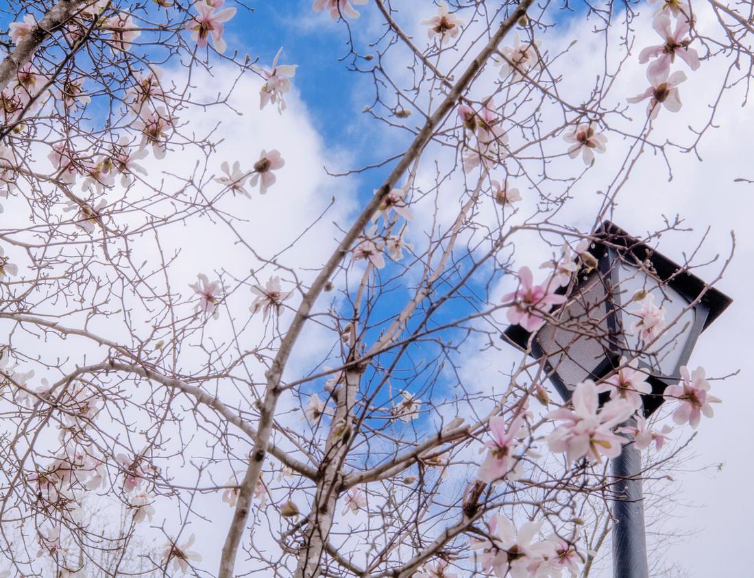 Spring Lamp Post