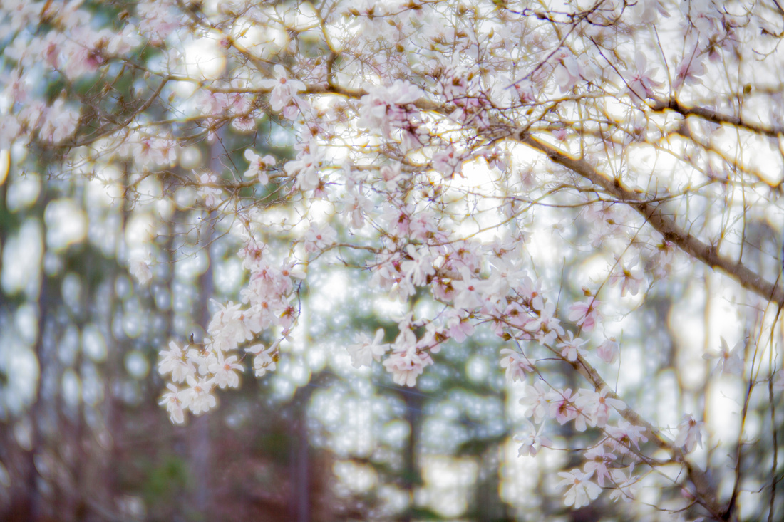 Magnolia Woodlands